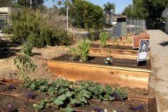 plant-bed-e1566359695504